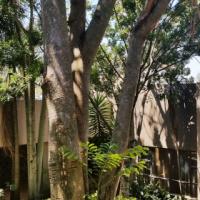 Elegant and Spacious Family Home in Moreleta Park