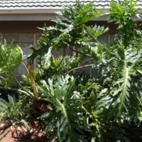 Gemeubileerde tuinwoonstel te huur in Pierre van Ryneveld