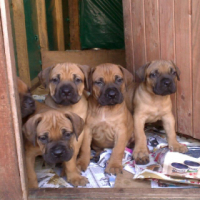 Beautiful Loving Pups for sale