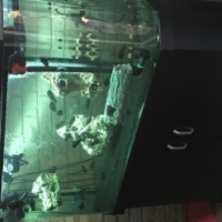 Fish Tank Awesome