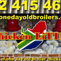 Best Quality Broiler Feed in S.A