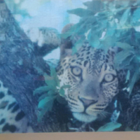 Leopard Puzzile Picture with Wooden Frame & Glass
