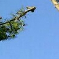 Tree felling and tree rubble removals