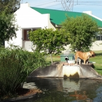Garden cottage Benoni, All inclusive, quiet and spacious on beautiful plot. secure and quiet.