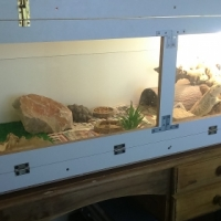 empty bearded dragon cage and extras for sale