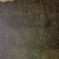 Lucerne and grass bales