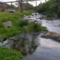 5.4HA stand 8km from Kolonade River runs through it R4.8 Neg.