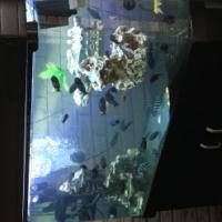 Fish tank curved glass, beautifull
