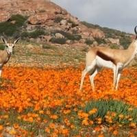 Wildplaas te Ceres Karoo - R525000 Finansiering
