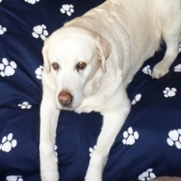 Strong Durable S M and Large Dog Beds for sale