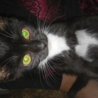 playful kitten for sale
