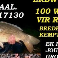 Rooi kariba erdwurms te koop for sale  South Africa