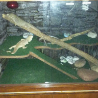 Terrarium for Bearded Dragons