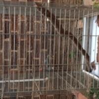 Parot cages