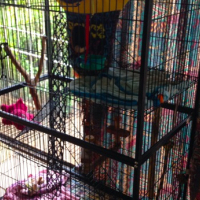 Large parrot or marmoset indoor cage