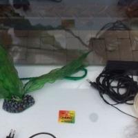 Vistenk / Fish Tank
