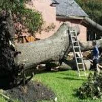 Professional Trees Feeling Service