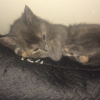 Kittens to a good home