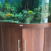Large freah water fish tank for sale.