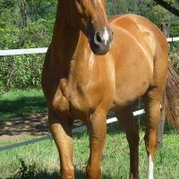 Stunning gelding jumping 80cm