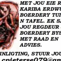 Rooi kariba erdwurm plase for sale  South Africa