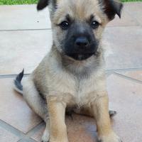 Puopy dog