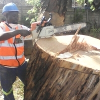 Westrand Tree removal,BushRemoval,Trimming and Site clearing 0734421108