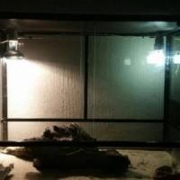 Reptile Aquarium