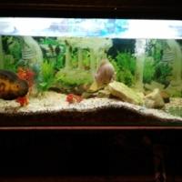 260 liter fish tank