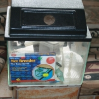 15L Breeding Fish Tank for Sale