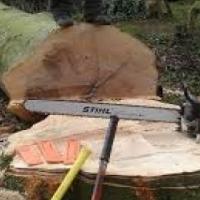 Tree Felling Centurion
