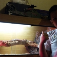 Cornsnake with cage and accessories