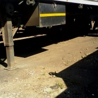 Flatbed triaxle trailer for sale