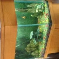 Beautifull fishtank on oak cupboard