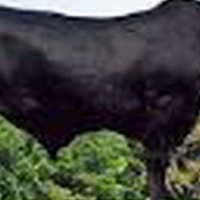 Free State cattle farm with DIAMOND mining opportunity