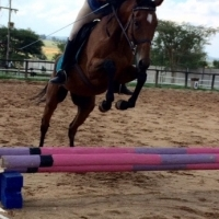 Gently bay mare for sale