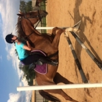 Good looking Chestnut mare for sale