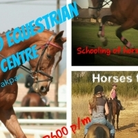 stabeling for horses
