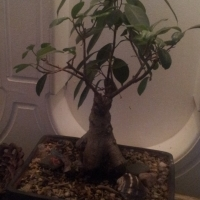 Various Plants For sale