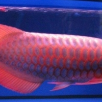 Tropica freshwater fishes for sale