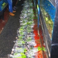 Potted aquarium plants at ONLY R10-00 each