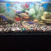 2 ft malawi tank for sale
