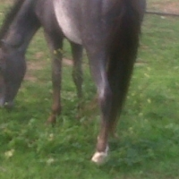 childrens pony for sale