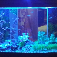 150Litre Complete fish Tank with metal stand, Fish and existing accessories