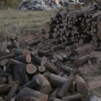 Quality gum fire wood for sale