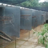 African Greys Ads In Birds And Aviaries For Sale In South