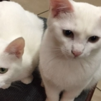 Beautiful mother & son are looking for a loving home. Fee incl Sterilisation, microchip, vaccs, etc.