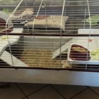 Guinea pig / Rabbit / Chinchilla cage for sale