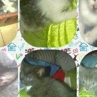 Cute Kittens needs new home