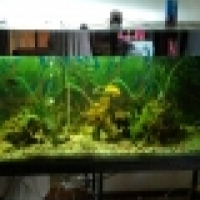 huge Fish tank for sale